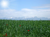 Green field under white clouds. With mountains behind Stock Photography