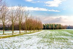Green field under snow by trees near Prague. Green field under white snow by trees near Prague Stock Photo