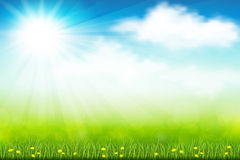 Green field. Vector illustration green summer field with flowers and grass Stock Images