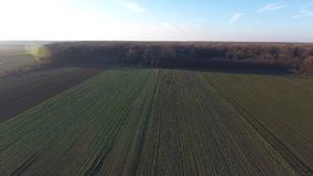 Green field, view from drone stock video footage