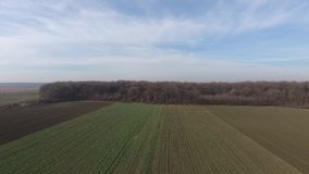 Green field, view from drone stock video