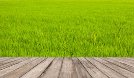 Green field wall and wood floor Stock Image