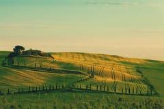 Green field on warm sunrise. Rolling hills, green field on warm sunrise Royalty Free Stock Photos
