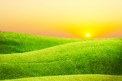 Green field of wave grass and sunset Stock Photos