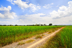 Green field and the way Royalty Free Stock Photos