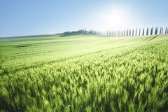 Green field of wheat and farm house, Tuscany Stock Photos