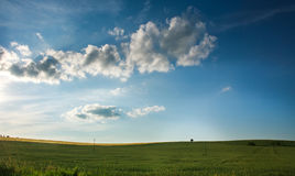 Green field of wheat growing on blue sky background Stock Image