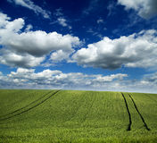 Green field of wheat over an amazing cloudscape Royalty Free Stock Photo