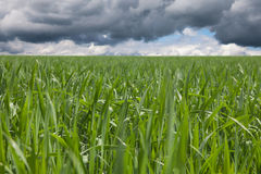 Green field. Stock Photos