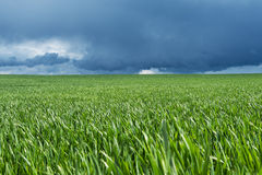 Green field. Stock Photos