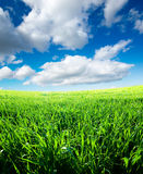 Green field and white clouds Stock Images