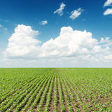 Green field and white clouds in blue sky Royalty Free Stock Photos