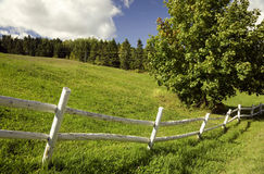 Green field with a white fence stock photos