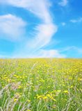 Green field with wild flowers Royalty Free Stock Photography
