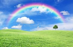 Green Field With Lone Tree And Rainbow Royalty Free Stock Image
