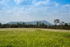 Green Field Wonderful Land Stock Image