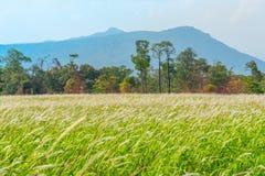 Green Field Wonderful Land Royalty Free Stock Photography