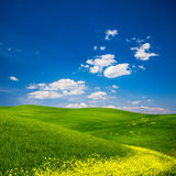 Green Field with Yellow Flowers. Beautiful view of a green field with yellow flowers in Tuscany, Italy stock images