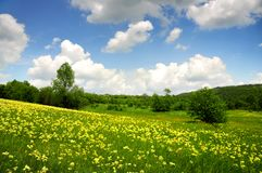 Green field with yellow and white clouds Stock Photography