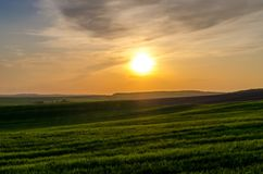 Green field of young wheat against the backdrop of the sunset ov royalty free stock photos