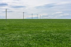 Green field of young wheat, poles with electrical wires into the distance and the cloudy sky Royalty Free Stock Photography
