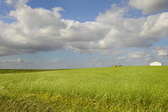 Green fields Royalty Free Stock Photos