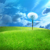 Green fields. With a dandelion in it Royalty Free Stock Photos