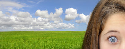 Green fields Stock Photography