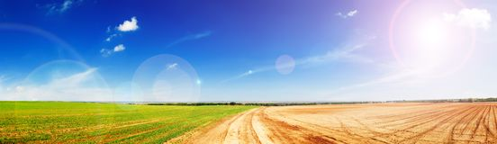 Green fields Stock Images