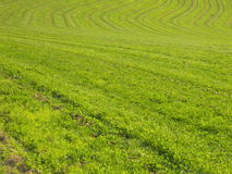 Green fields. Spring fields, green natural background Royalty Free Stock Photos
