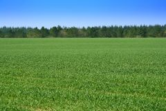 Green Fields. A green grass field on a farm in England Royalty Free Stock Image