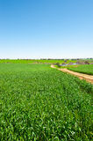 Green Fields Stock Photos