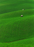 Green fields. A beautiful rich green field; agriculture Royalty Free Stock Images