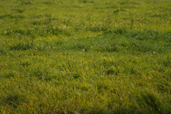 Green fields. Green pastures stock photography