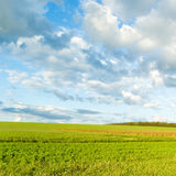 Green fields royalty free stock image