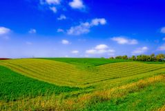 Green Fields. A landscape view of a field with symmetrically tilled soil, against a blue sky scattered with small, white clouds Royalty Free Stock Photography