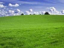 Green fields. Green meadow under a nice blue sky Stock Photos