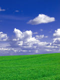 Green fields. Green meadows under a cloudy blue sky Royalty Free Stock Photography