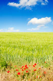 Green fields royalty free stock photo