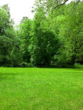 Green fields. Green grass with trees as background Stock Photography