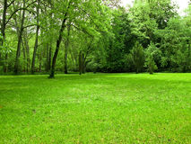 Green fields. Green grass with trees as background Stock Images