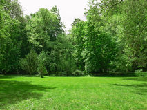Green fields. Green grass with trees as background Royalty Free Stock Photos
