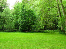 Green fields. Green grass with trees as background Stock Photo