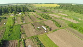 Green fields aerial view before harvest at summer stock video footage