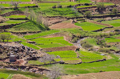 Green fields in Atlas mountains Stock Photography