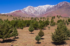 Green fields in Atlas mountains Royalty Free Stock Photo