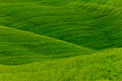 Green Fields Background. With fresh grass on smooth hillsides Stock Images