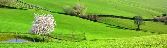 Green fields. On a beautiful day in the green field stock photo