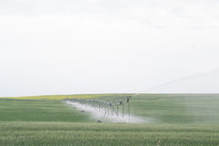 Barley fields being irrigated. Green field of barley crops being irrigated in the countryside Stock Images