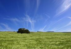 Green fields and blue cloudy sky landscape Royalty Free Stock Images